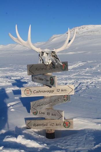 Dnt Svensk Natur Scandinavia Sverige Turglede Fjäll Skitouring Backcountry Caihnavaggi Svenska Tursistföreningen Antler Elk Moose Sighn