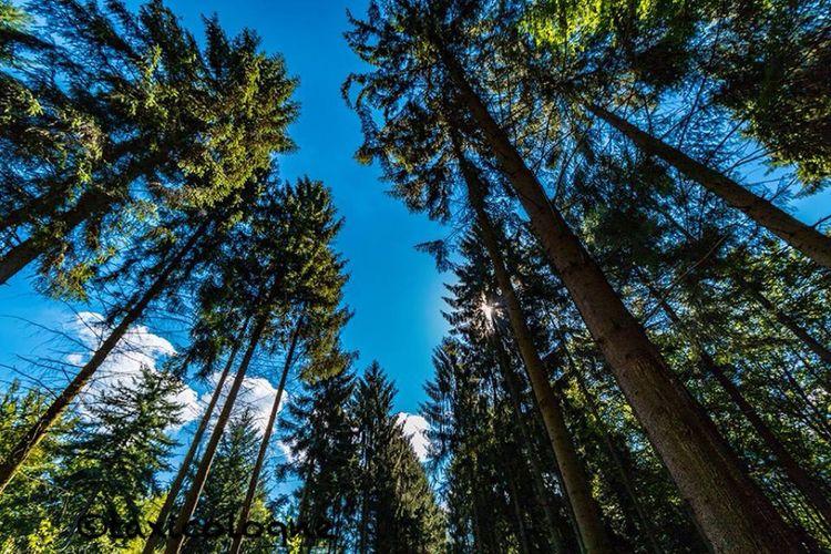Wahnerheide Forrest Im Wald Nature Waldspaziergang Wald Thisiscologne Deutschland Germany Köln