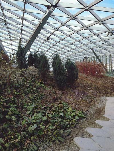 Greenhouse Plant Nursery Agriculture Sky Architecture Plant Plant Life Botanical Garden Flowering Plant
