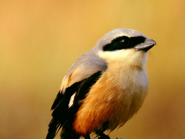 The Great Outdoors - 2017 EyeEm Awards The Week On EyeEm Beak Bird Close-up Day Nature No People Outdoors