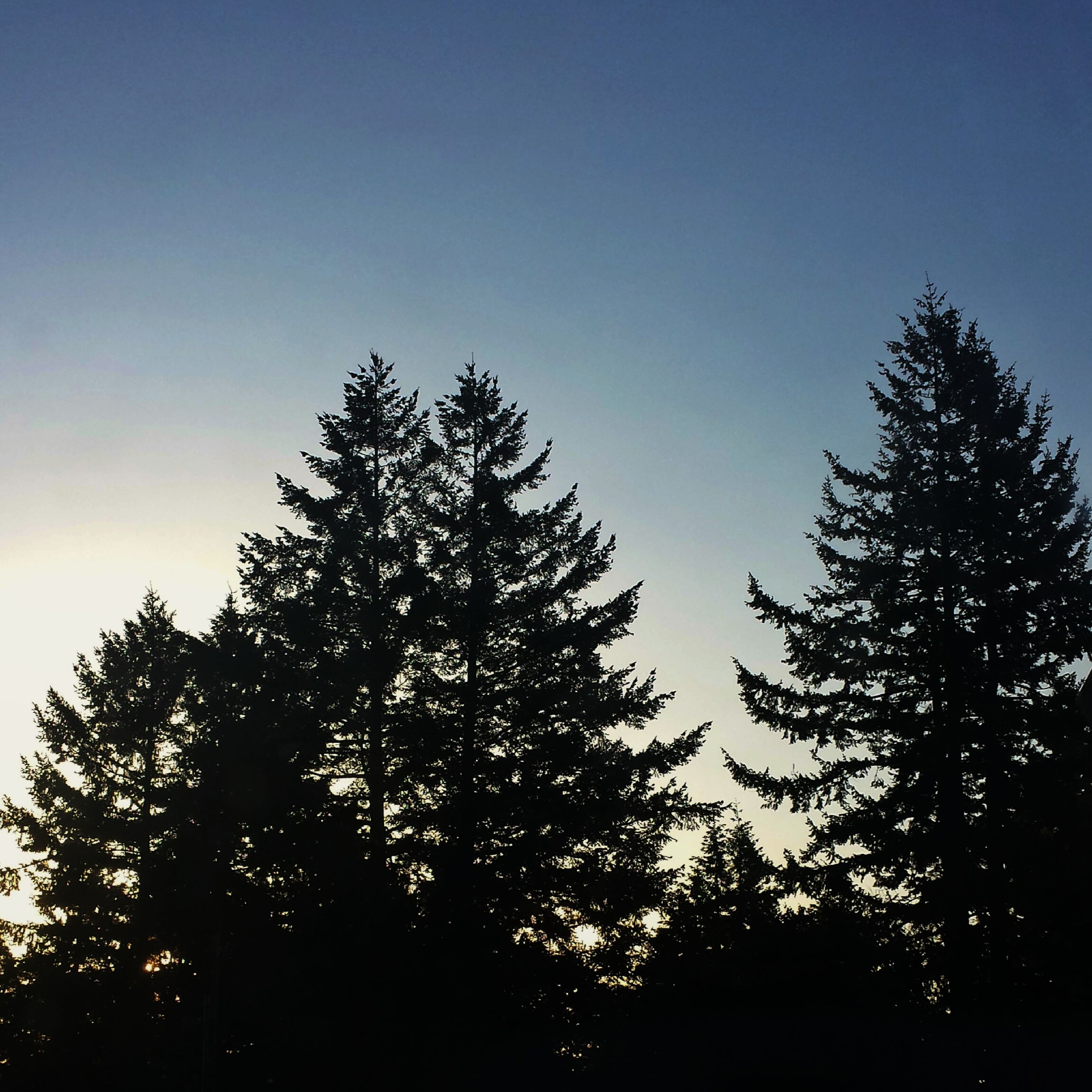 tree, low angle view, silhouette, clear sky, growth, beauty in nature, blue, tranquility, nature, branch, sky, scenics, tranquil scene, copy space, high section, treetop, outdoors, no people, dusk, idyllic