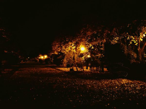 Night No People Illuminated Outdoors Nature Tree Autumn