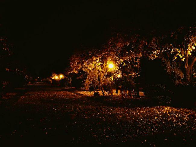 Night No People Illuminated Outdoors Nature Tree Autumn