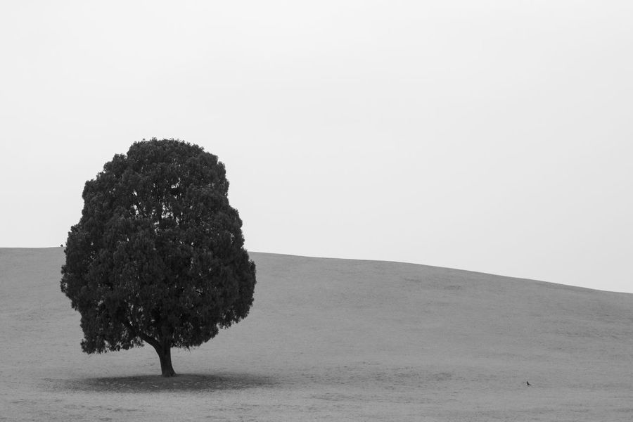 Famous Places to take a picture of so-called Lonely Tree at Olympic Park  Seoul_korea Monochrome