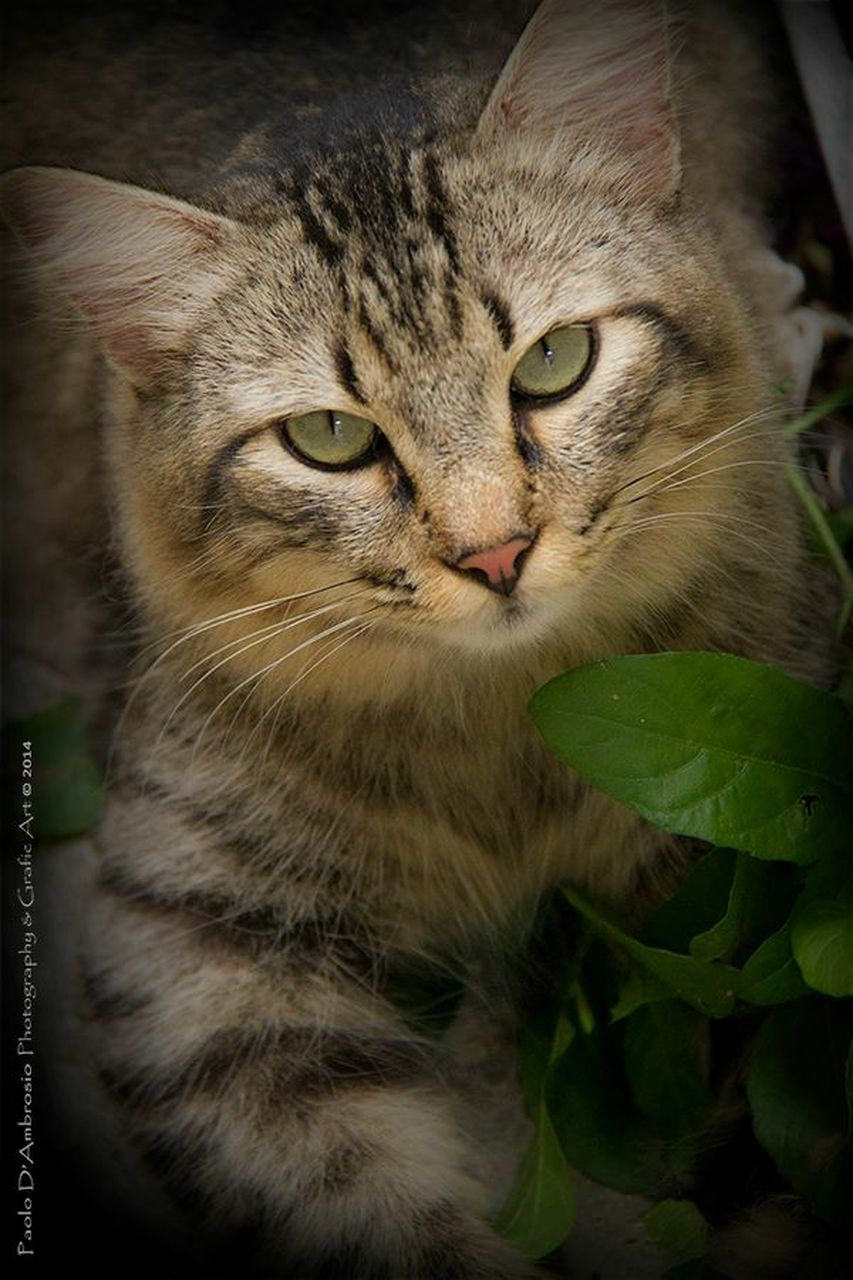 domestic cat, feline, one animal, animal themes, domestic animals, pets, mammal, whisker, no people, close-up, day, indoors, nature