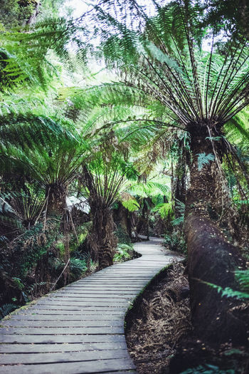 Adventure Club Australia DEEP FOREST Green Green Green Green!  Nature Adventure Beauty In Nature Day Growth Land Nature No People Outdoors Park Plant Rain Forest Rainforest Scenics - Nature Tranquil Scene Tranquility Tree Walk In Nature