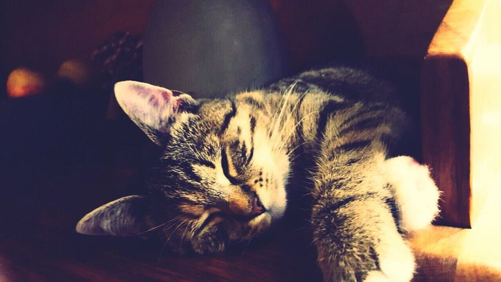 Cat Cheese! Hanging Out Check This Out Relaxing Enjoying Life Taking Photos