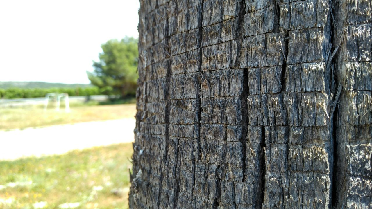 tree trunk, tree, day, textured, focus on foreground, close-up, outdoors, no people, nature, wood - material, sky