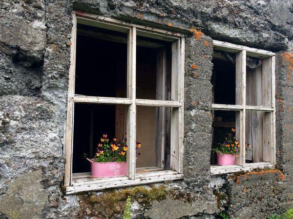 Blóm í gluggum: Flowers in deserted windows No Filter Iceland Stálpastaðir Deserted House Window Flowerpots