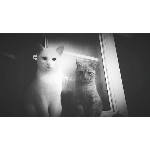 Just Chillin' Look At Us! Photogenic Cats Friendsforever Taking Photos Hanging Out Kitty Love Blackandwhite Photography