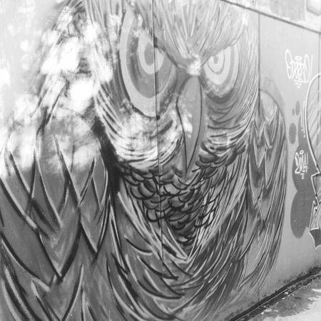Owl Gufo Graffiti Paint wall blackandwhite B&W Portrait Shades Of Grey B&w Street Photography