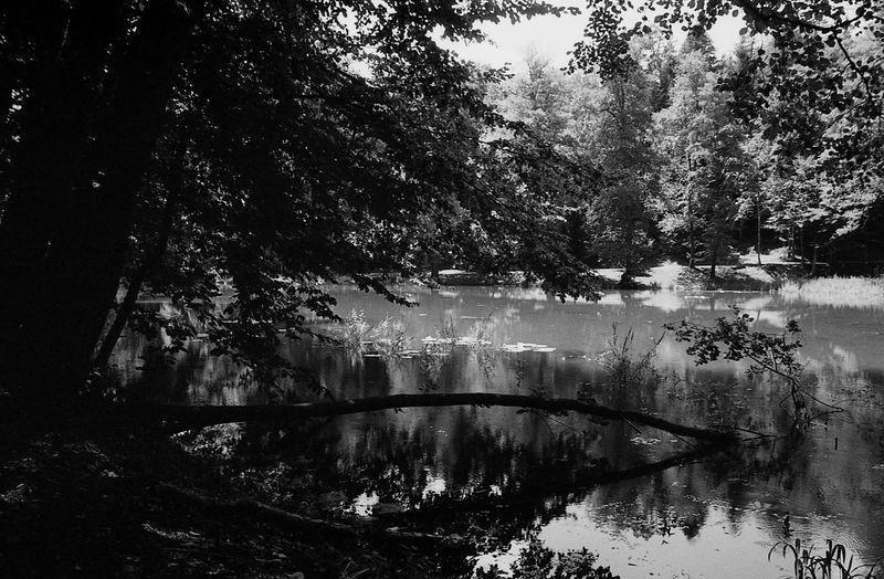 Nature 35mm
