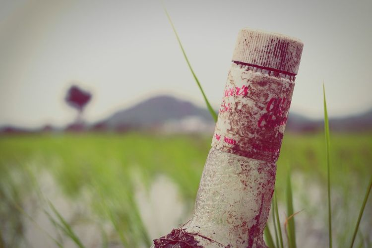 EyeEm Selects Day Focus On Foreground Outdoors Grass No People Nature Tree Close-up Water Sky Wine Not