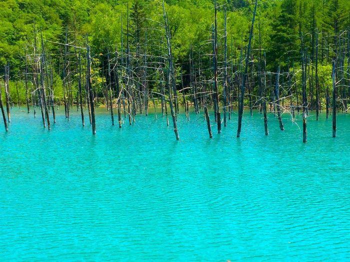 blue pond /
