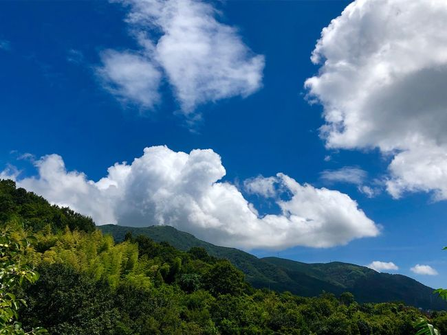 Some Masses of Cumulus Clouds Spreading over Mt. Haigamine. (180825-181004) Cloud - Sky Sky Beauty In Nature Plant Tree Scenics - Nature Tranquility Tranquil Scene Nature Landscape Mountain Non-urban Scene Green Color Growth Blue Idyllic Day Outdoors No People Low Angle View