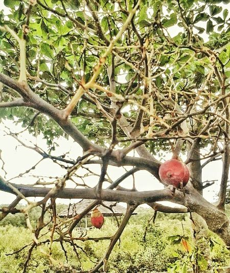 Tree Branch No People Growth Nature Hanging Beauty In Nature Freshness Close-up Red Fruit Outdoors Cottage Garden  Behind The Shades