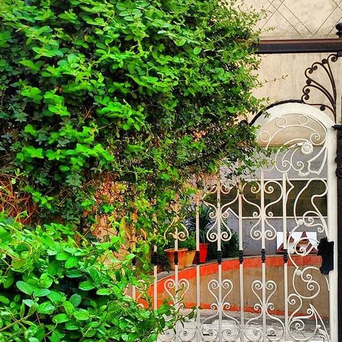 دروازه بهار.... ایران تهرانگردی تهران شهرمن خیابان_شریعتی نوروز95 در درخت Iran Iranpics Tehran Tehranpic Mycity Streetlife Greentree Nowruz95 Spring