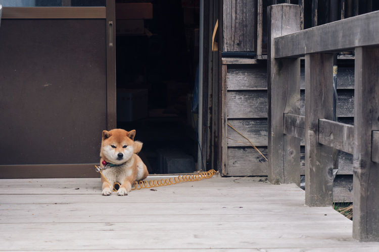 Portrait of dog on door