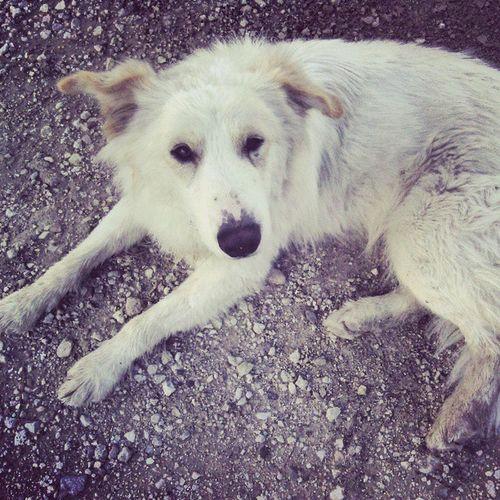 Pirata Dog Perro Mascota Fontes Castalla SPAIN Ladrondezapatillas Nice Cute