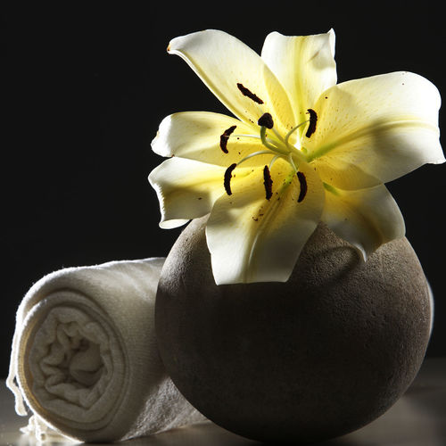 yellow flower lily on the round vase with towel Flower Flowering Plant Freshness Plant Close-up Lily Lily Flower Floral Petal Nature Summer Blossom White Spring Decoration Color Flora Blooming Bright Bouquet Leaf Green Bud Single Object Pretty Elégance Flower Head Inflorescence Beauty In Nature Vulnerability  Fragility Studio Shot Growth Black Background No People Yellow Indoors  Pollen Hygiene Massage