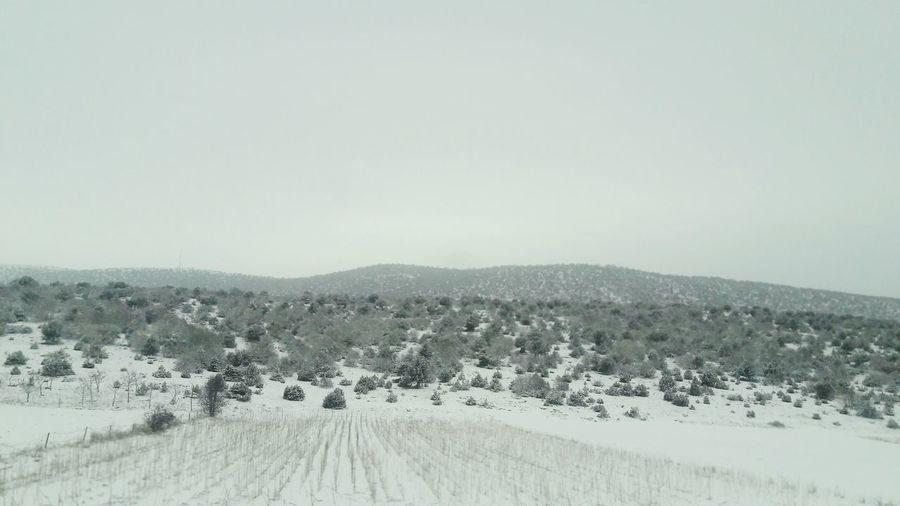 Snow Winter Nature Landscape Cold Temperature Beauty In Nature Scenics Outdoors No People Mountain Tree Day Karlı Fidan Gelecek Karla Korunma Altında Yeryüzü Bembeyaz