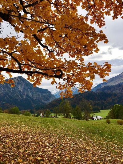 Close-up of autumn tree by grassy field by mountain