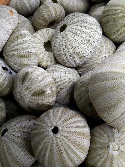 Full frame shot of dead sea urchins