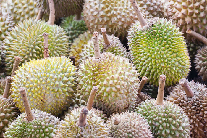 Durian tropical fruits or king of fruits famous in Malaysia, Singapore, Thailand and Indonesia Durian Fruit Durian Durian Season Durianlovers Tropical Fruits Sweet Food Healthy Eating Fruits Strong Smell Spikey Fruits And Vegetables Fruits Stall Fruits Market