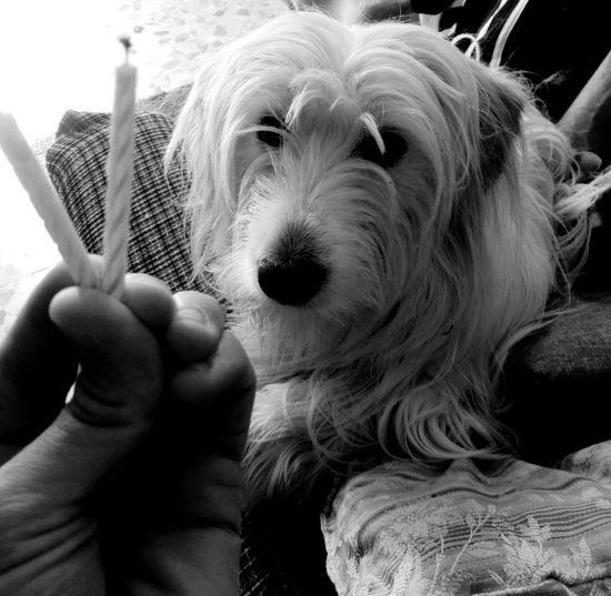Birhtday +2 Human Hand Pets Dog Portrait Puppy Eye Close-up