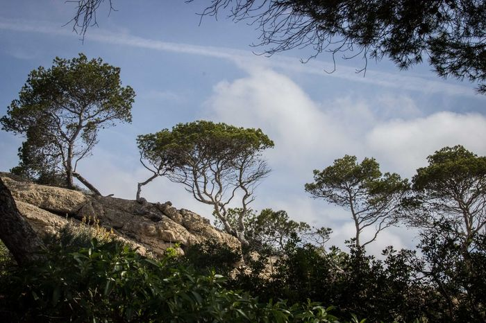 4 Trees Beauty In Nature Cliffs Cliffside Framed Growth Low Angle View Mallorca Mediterranean  Nature No People Outdoors Peguera Rocks Sky Stone Material Tree