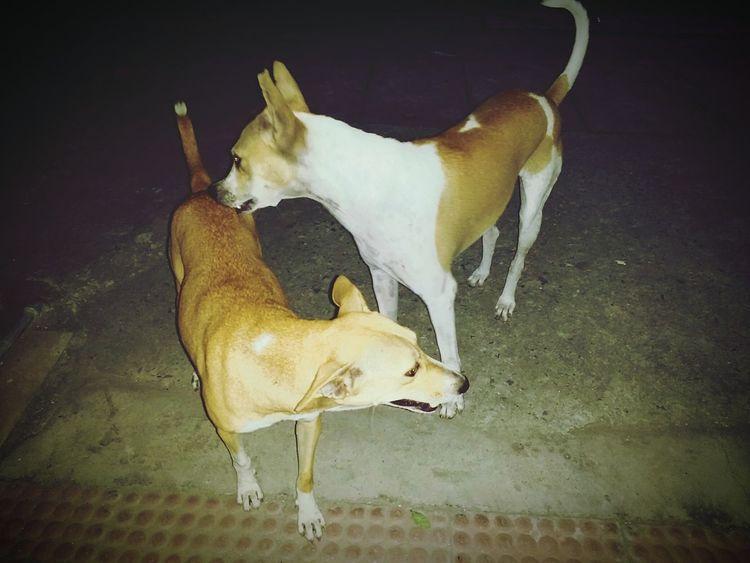 Dog Animal Themes Animal Canine Streetphotography Streetdogs Newdelhi Streetsofdelhi Streetsofindia👣 DelhiGram Sodelhi Dfordelhi Thikanadilli