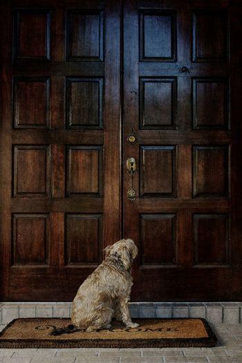 Dog sitting on doormat by closed door