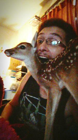 orphan Orphaned Baby Deer Helpless.. Hopefull