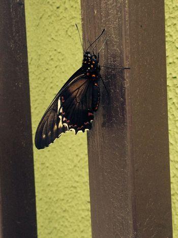 Butterfly fly away ...
