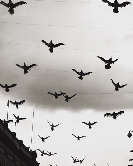 Avian Bird City Life Cloud - Sky Day Flying Low Angle View Mid-air No People Outdoors Sky Spread Wings