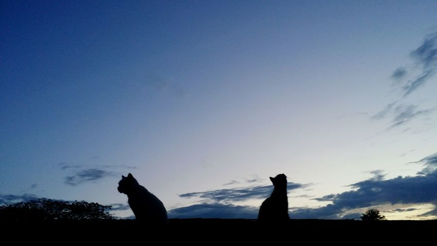 Silhouette Blue Outdoors Sky Animals In The Wild Day Nature Animal Themes