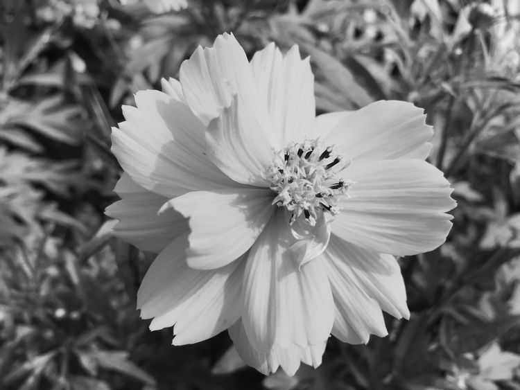 Black & white beauty Blackandwhite Black & White Black And White Photography Black And White Flowers Black And White Flower Black And White Flower Collection