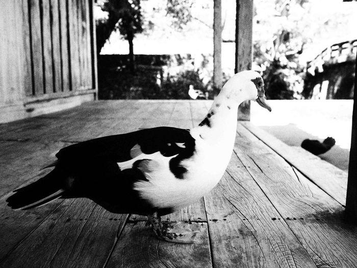 Naha City Black And White Photography Japenesestyle Naha-shi Black & White City Life Black And White Blackandwhite Lifestyles
