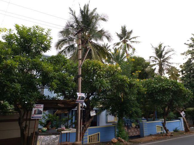 "road tree view"" Roadside Tree Road Tree View Tree Building Exterior"