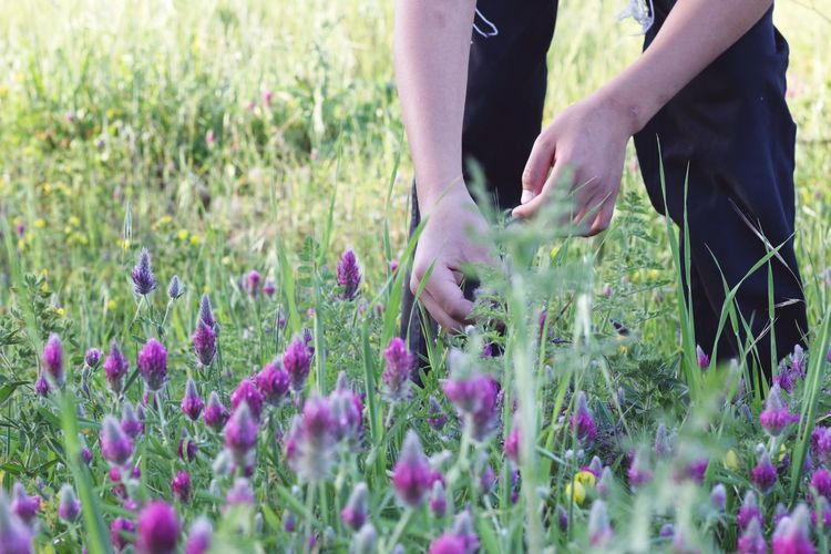 A boy in a field of purple flowers Trip Nature Plants Outdoors Green Fun Light Summer Boy Outdoor Day Purple Flower Purple Flower Human Hand Flower Low Section Rural Scene Agriculture Field Mid Adult Lavender