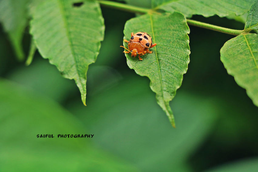 Insect Green Color Leaf Animal Themes Animal Close-up One Animal Animals In The Wild Animal Wildlife Nature No People Plant Outdoors Beauty In Nature Living Organism Day