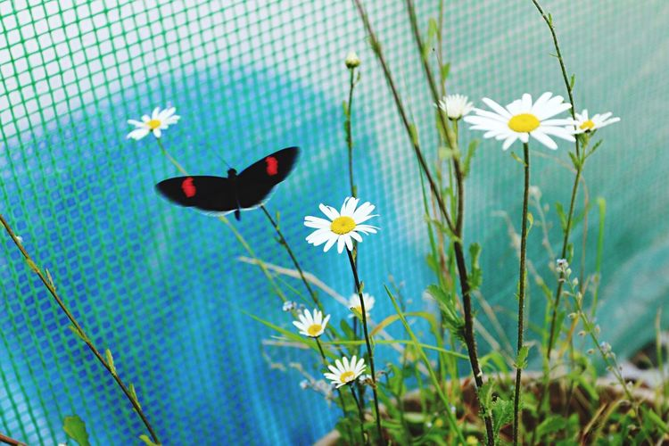 Flower Fragility Nature Beauty In Nature Freshness Blooming Petal Growth Plant Flower Head Animal Themes No People One Animal Close-up Insect Butterfly - Insect Day Outdoors