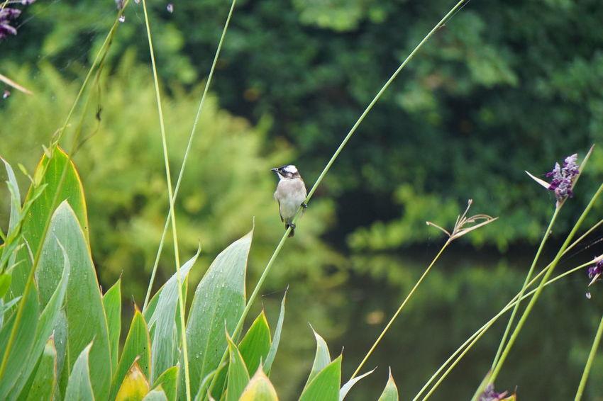 #bird Animal Themes Beauty In Nature Bird Nature Outdoors