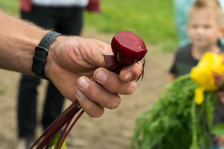 Close-up of hand holding common beet