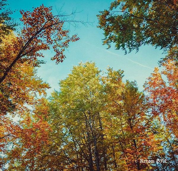 Doğa Nature Agac Tree Greens Green Sheet Sky Bluesky Uludag Holiday Clouds Blueclouds Autumn Uludag Bluecloudysky прошлойвесной Bluecloudscouture Tranquility Huzur Bursa 昨春 Sonbahar Sonbaharda Autumn color colorfull colornatural coloredwall autumnleaves primavera