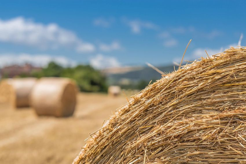 EyeEm Selects Bale  Hay Agriculture Hay Bale Field Rural Scene Day Straw Haystack Outdoors No People Stack Landscape Sky Nature Wheat Beauty In Nature Close-up