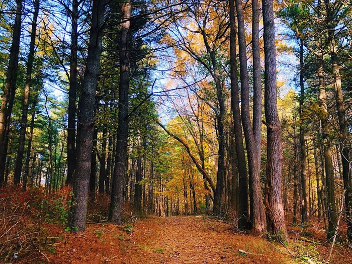 Bright colors Nature On Your Doorstep Nature Leaves Orange Color Fall Colors Nature_collection Fall Beauty Outside Tree Plant Growth Beauty In Nature Nature Land Forest Non-urban Scene Sunlight Sky Change Tree Trunk Scenics - Nature Tranquil Scene Trunk No People WoodLand Autumn Day Tranquility