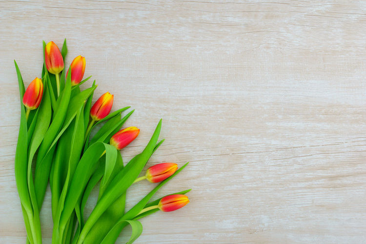 High angle view of red tulip on table