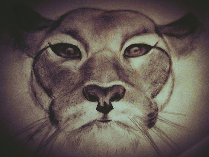 Art Drawings My Drawing Cougar Animals
