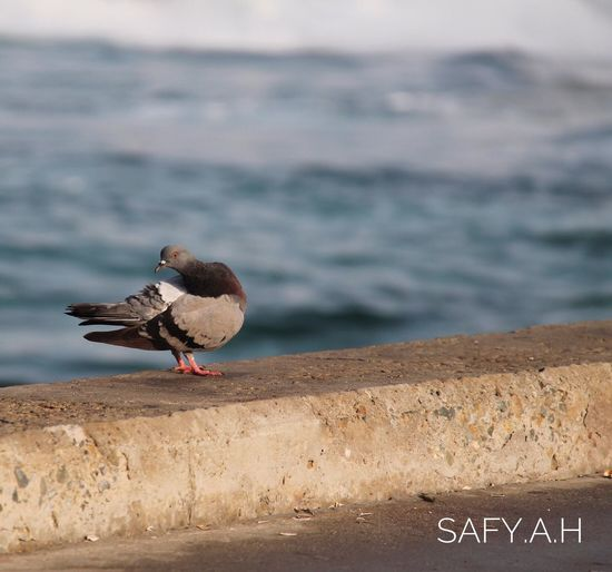 Second Acts Animals In The Wild Bird Animal Wildlife Animal Themes Water I Phone Photography EyeEm Selects جدة Jeddah Safy.a.h 2017 Be. Ready.